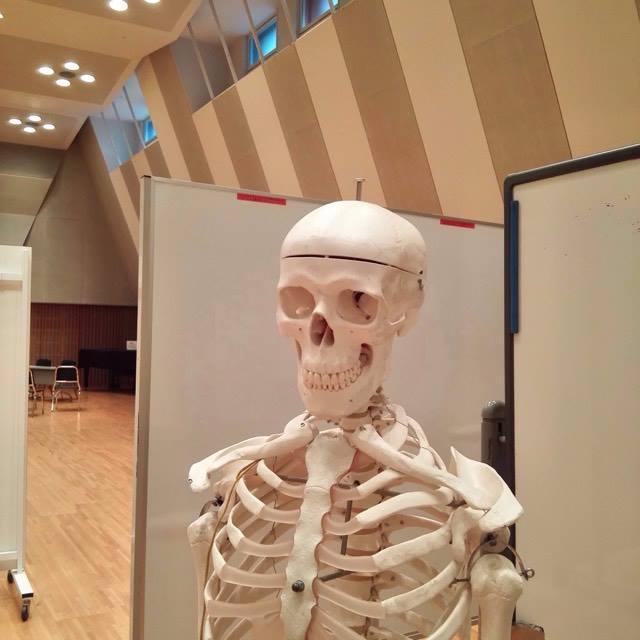 骨格模型・てあて整体スクール