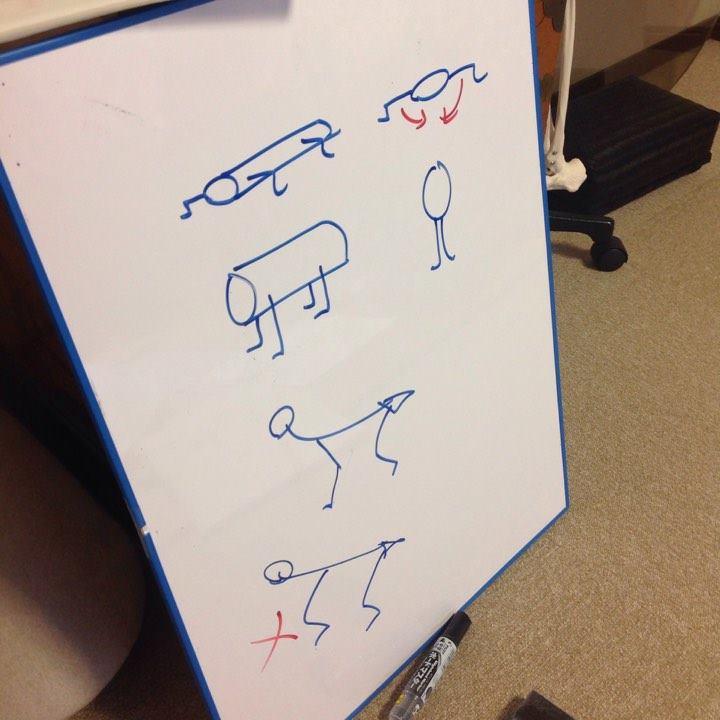 解剖学3・てあて整体スクール
