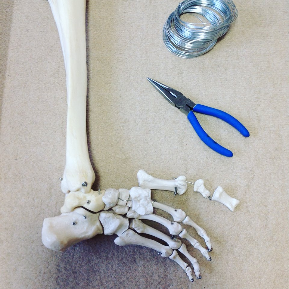 骨格模型修理1