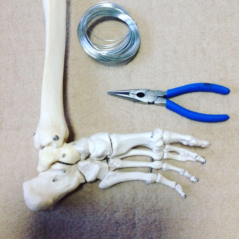骨格模型修理完成